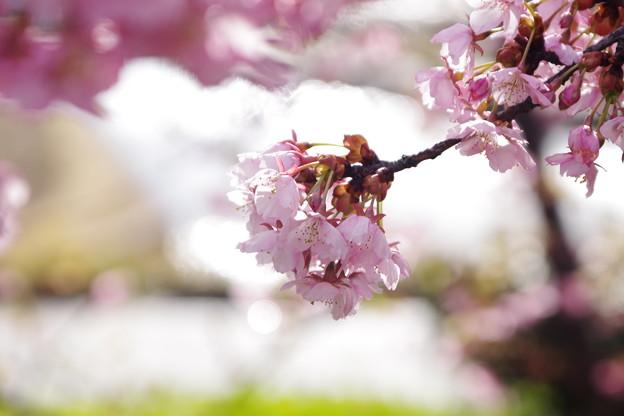 Photos: 「トキメキ」
