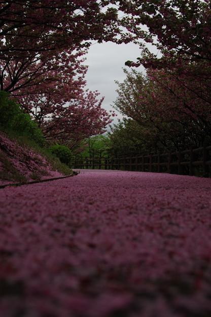 Photos: 「最後の誓い」