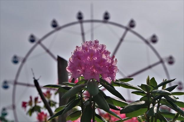 「高嶺の花」