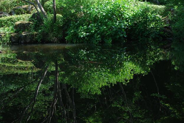 Photos: 「緑の隙間に実る恋。」