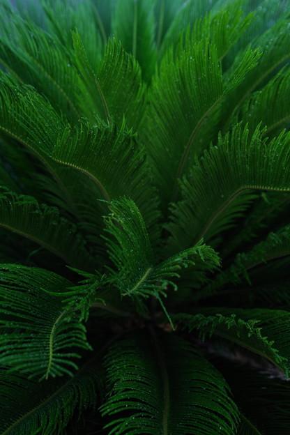 「Green shower」