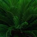 Photos: 「Green shower」