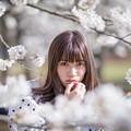 桜の向こうから。