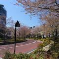 2018*東京ミッドタウンの桜5