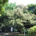 東京国立博物館*春の庭園開放1