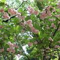 東京国立博物館*春の庭園開放2