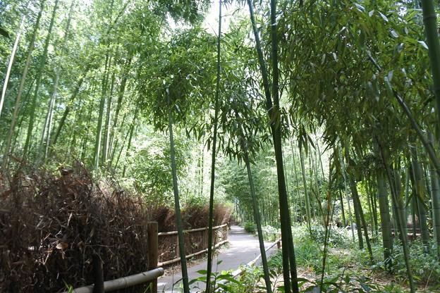 京都・嵐山*竹林