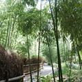 Photos: 京都・嵐山*竹林