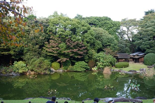 東博*秋の庭園開放