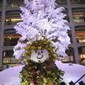 2018・KITTEのクリスマスツリー