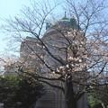 2019*東京国立博物館の桜5