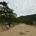 江戸時代にできた細長い砂州