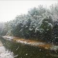 写真: 降りしきる雪@高野川