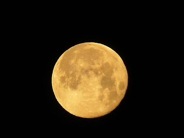 Photos: 明け方の月