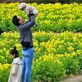 菜の花畑で戯れる親子