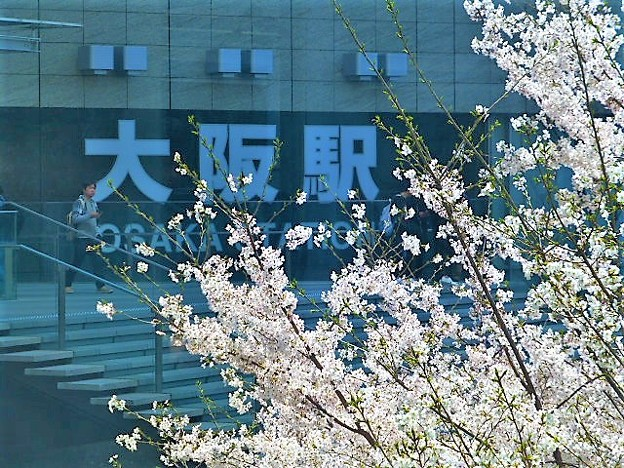 JR大阪駅と桜