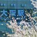 写真: JR大阪駅と桜