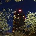 写真: 帝国ホテル 大阪