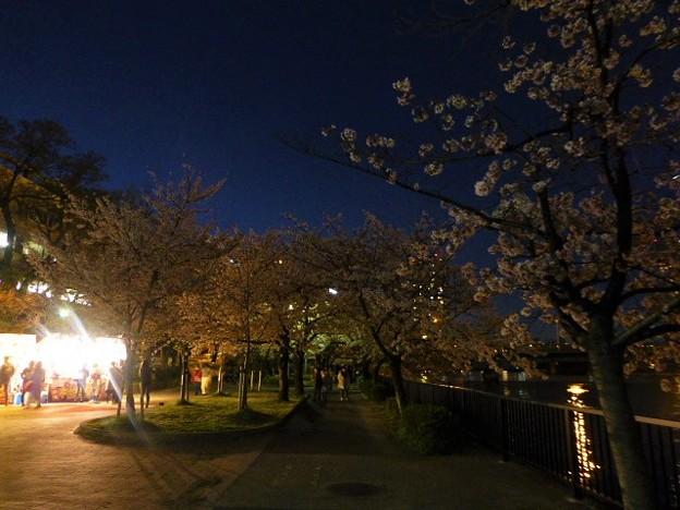 毛馬桜之宮公園の夜桜