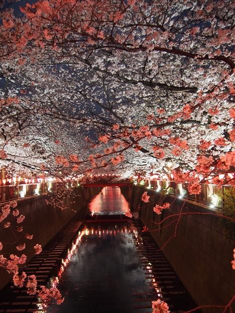 Photos: 紅白/目黒川