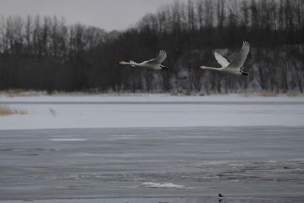 湖面を飛ぶ・・