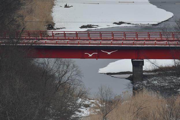 音羽橋と飛翔の重なり・・