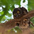 Photos: 幼鳥さん、目を丸くして・・