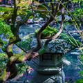 Photos: 南禅寺天授庵_090