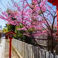 Photos: 2018 03 車折神社_047