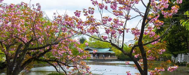 Photos: 2018 04 鶴岡八幡宮_118