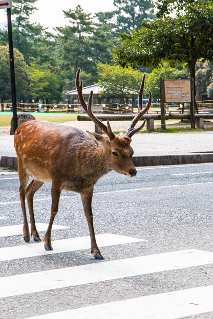 奈良公園_016