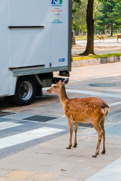 奈良公園_023