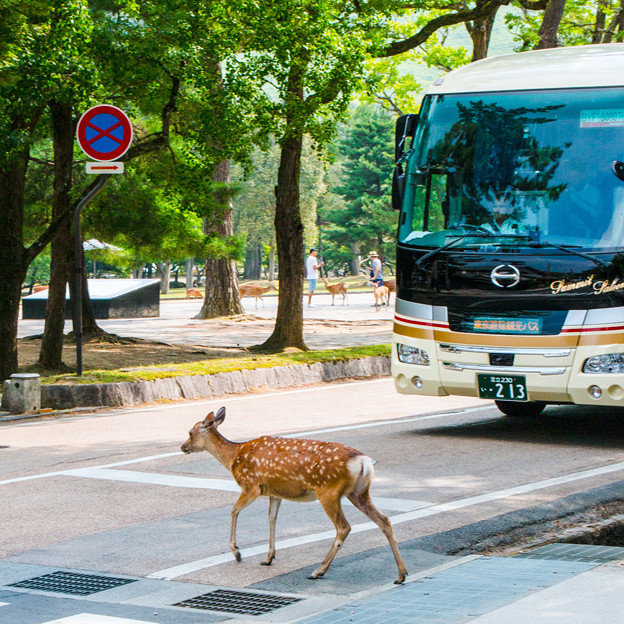 奈良公園_032