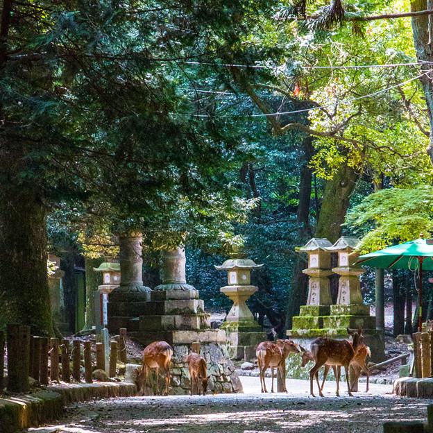 奈良公園_054