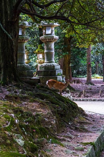 奈良公園_082