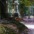Photos: 奈良公園_082
