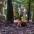 Photos: 奈良公園_083