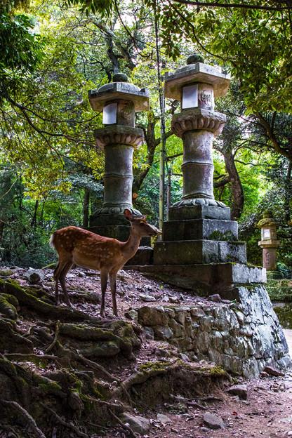 奈良公園_087