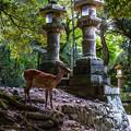 Photos: 奈良公園_087