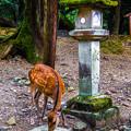 奈良公園_113