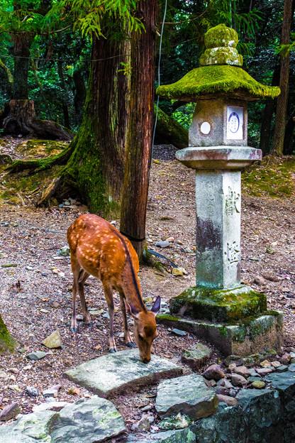 奈良公園_115