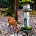 Photos: 奈良公園_115