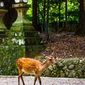 Photos: 奈良公園_123