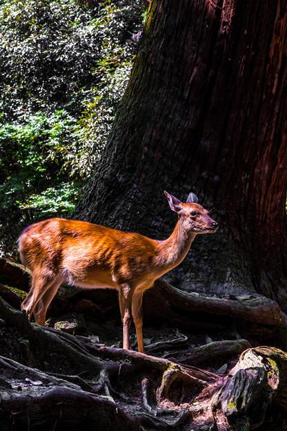 奈良公園_127