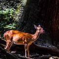 Photos: 奈良公園_127