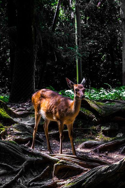 奈良公園_129