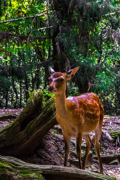 奈良公園_138