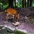 Photos: 奈良公園_148