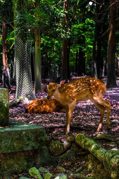Photos: 奈良公園_163