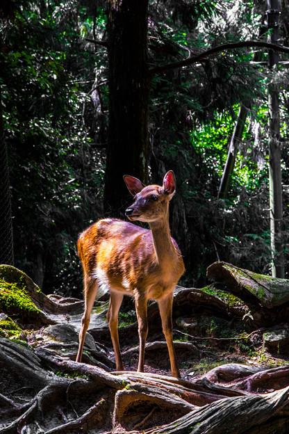 奈良公園_132